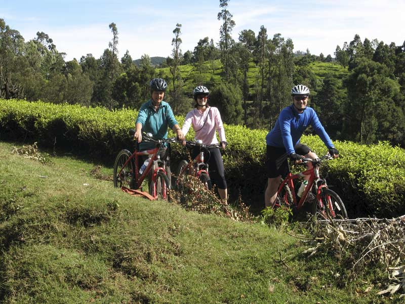 Tea estates near Ooty