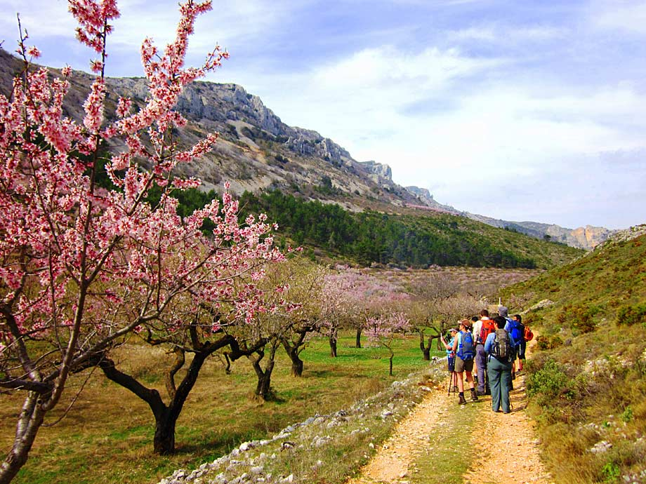 Walking amidst almond blossom, Aitana walk