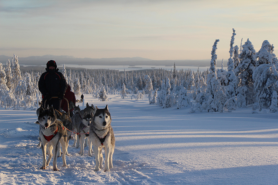 Dogsledding, Oulanka National Park