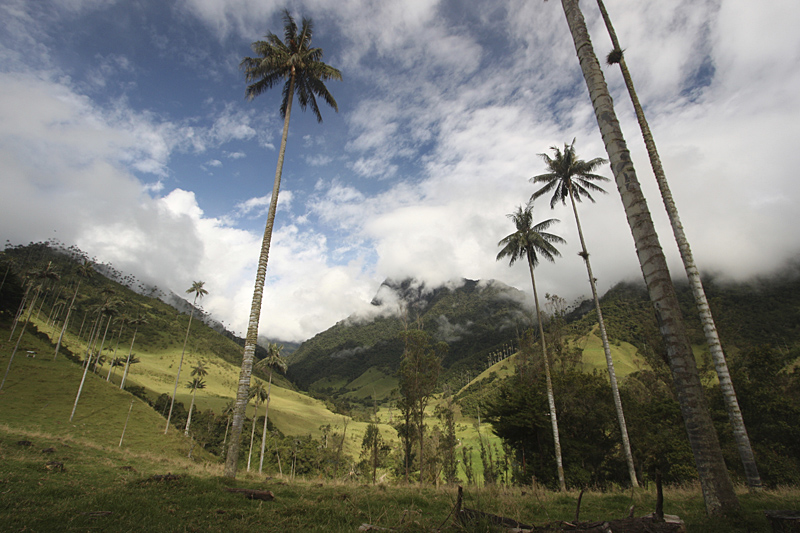 Cocora valley 01