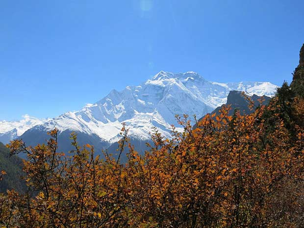 Autumnal colours in the Annapurnas, Nepal