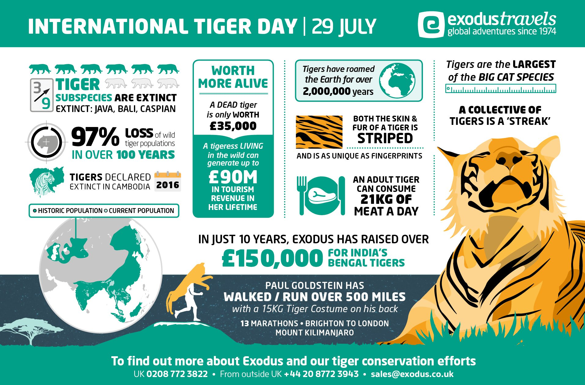 International Tiger Day Infographic