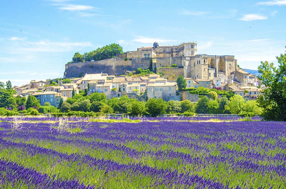 Provence lavender fields in France