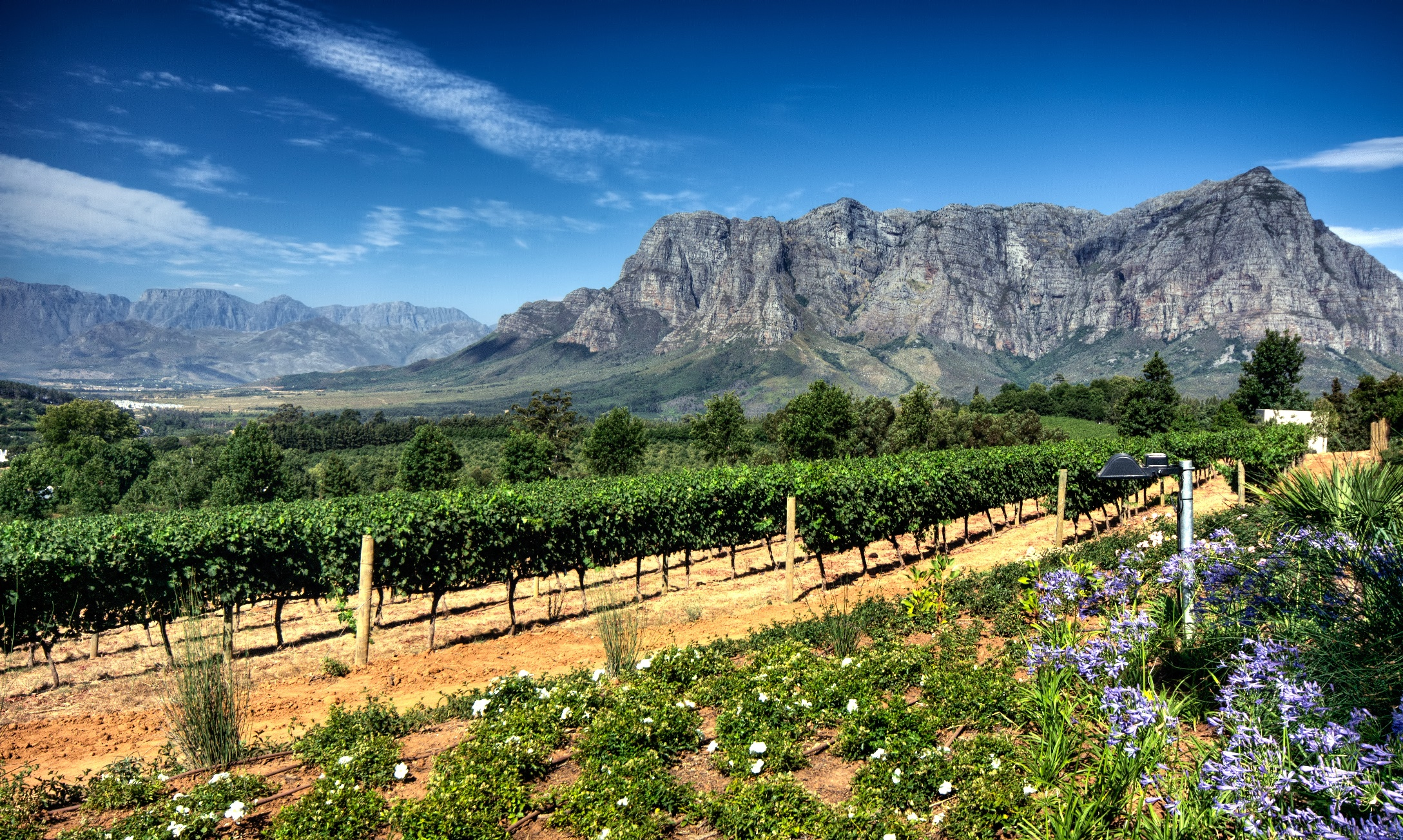 Stellenbosch Vineyard, South Africa