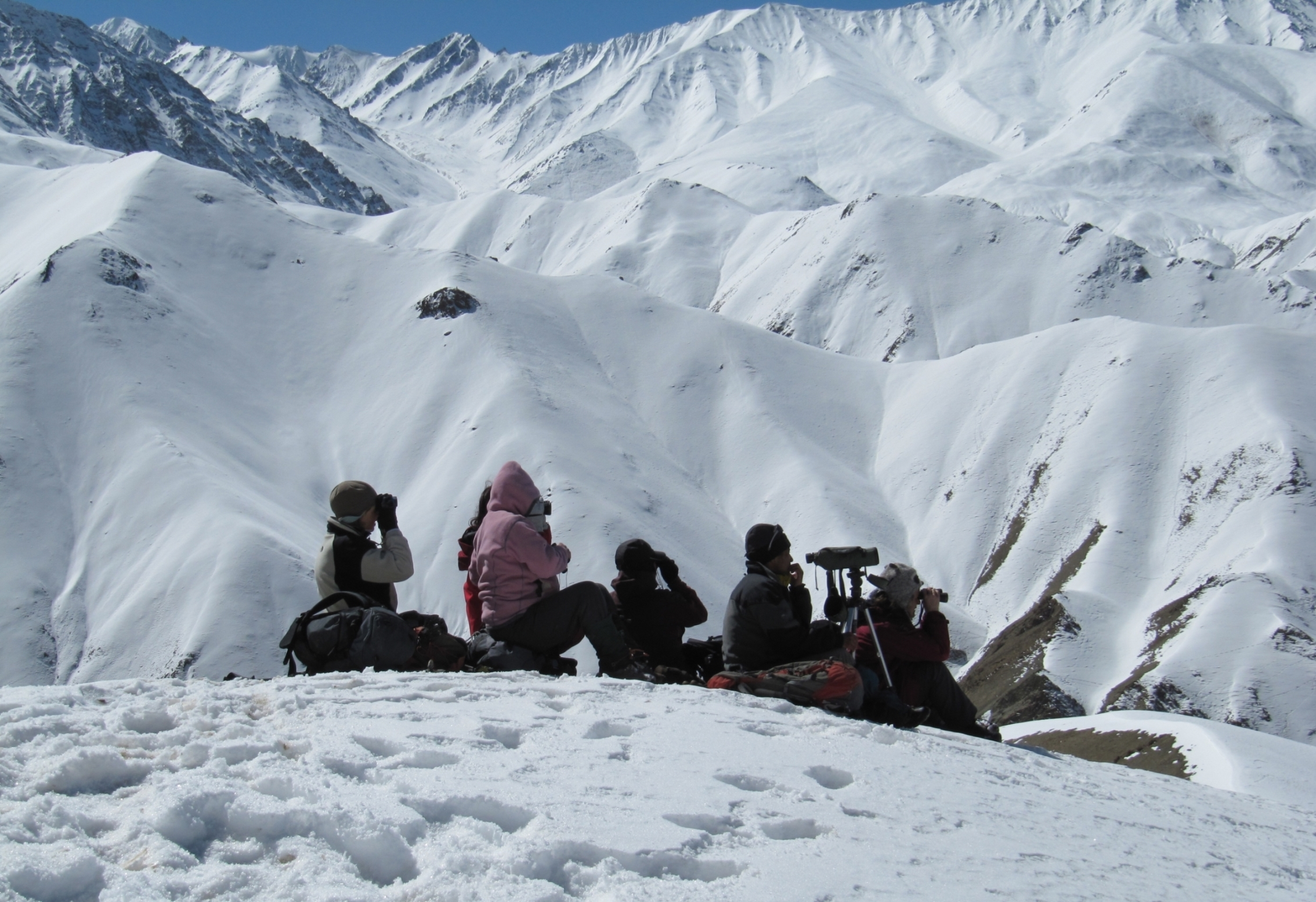 Exodus group scouring mountains for Snow leopards in Ladkh