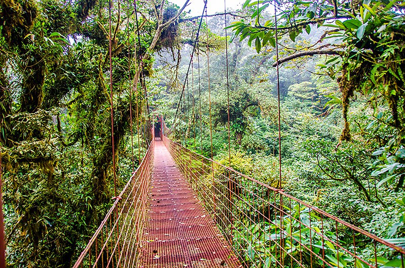 Bridge in Rainforest - Monteverde, beautiful cloudforest in the north of Costa Rica