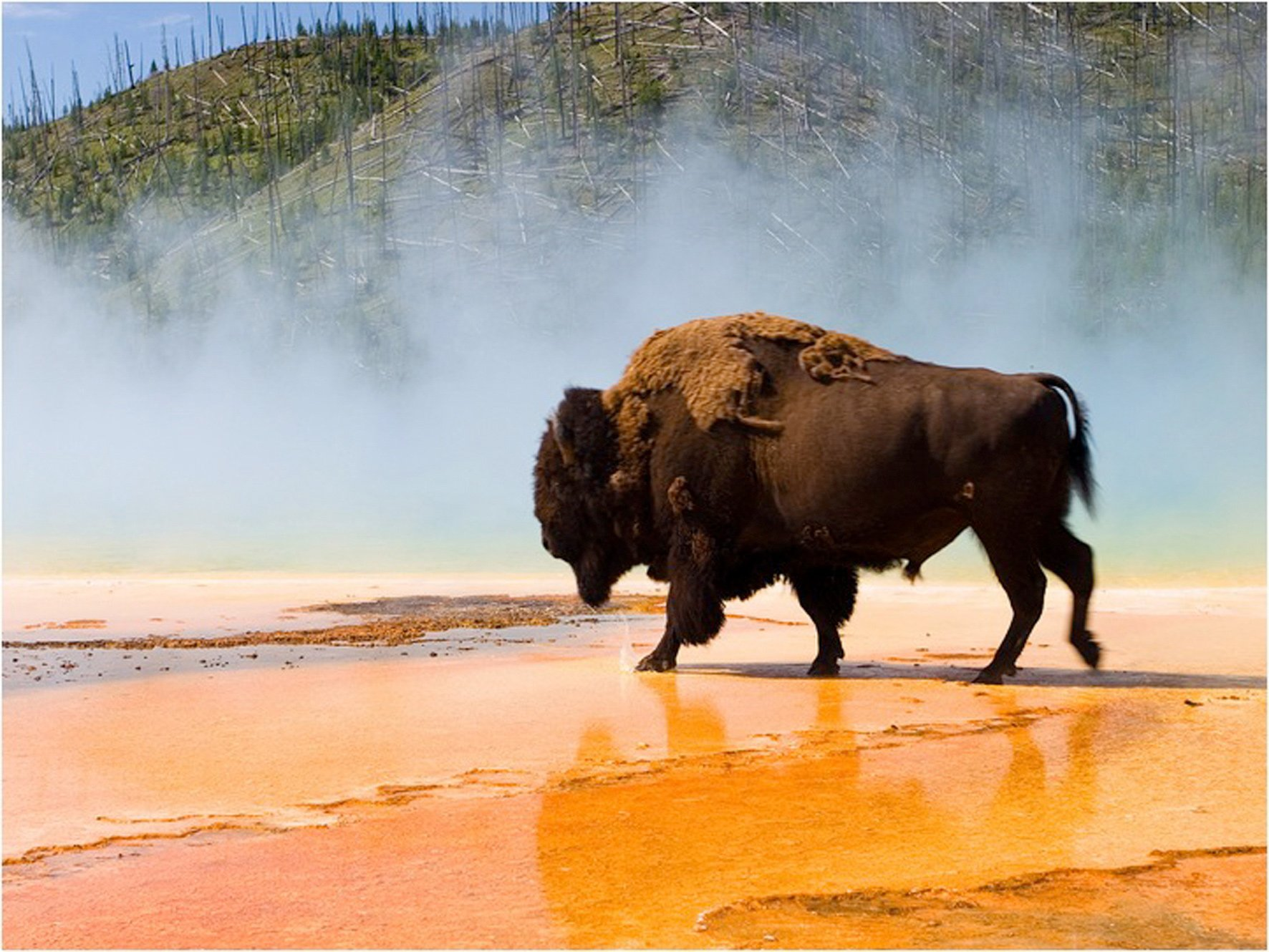 Yellowstone Wildlife Trails