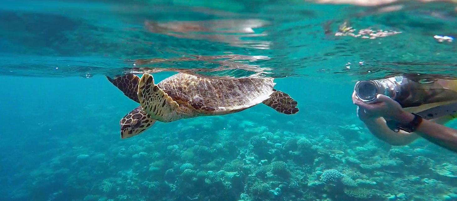 Marine Wildlife of the Maldives