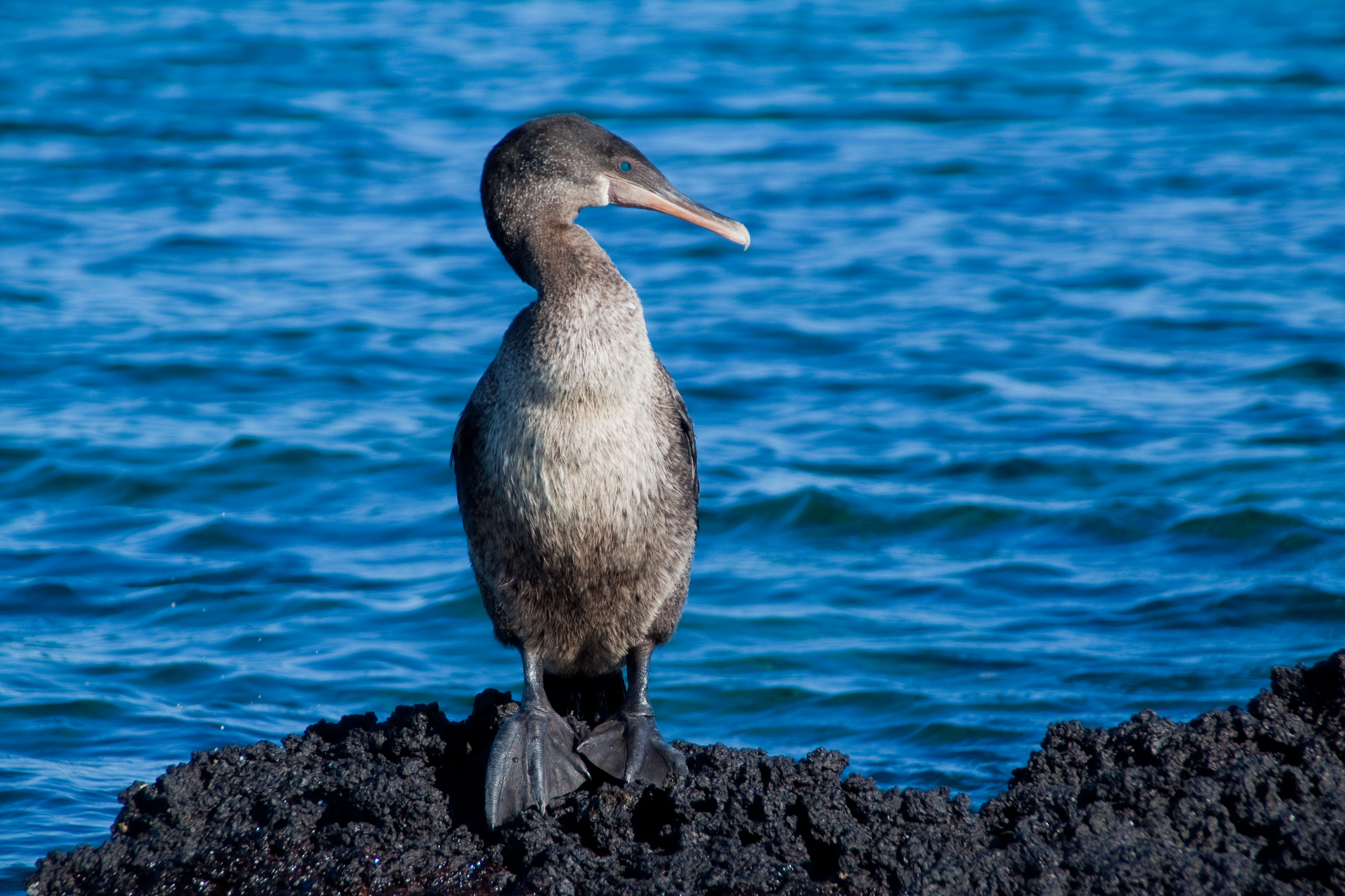 Galapagos Encounter - Archipel I (itinerary A)