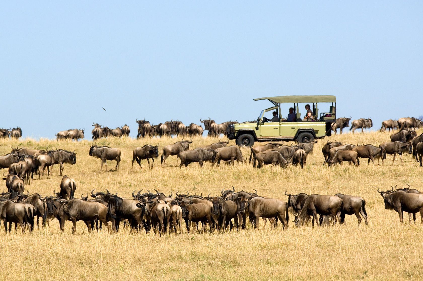 Tanzania: Wildlife Adventure