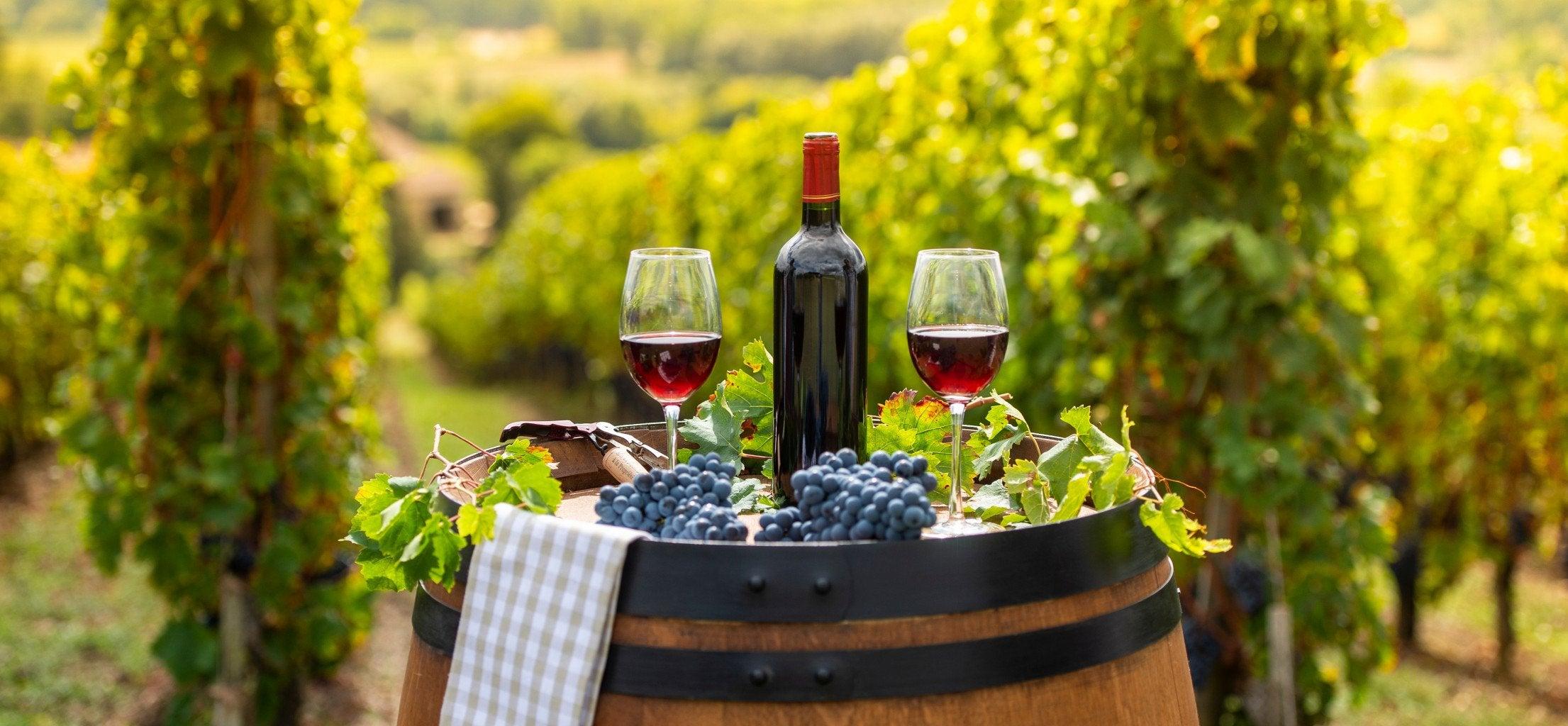 Gourmet Walking in Burgundy's Vineyards - Short Break