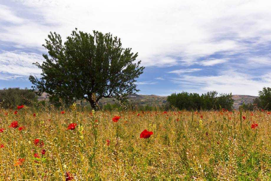 Wildflowers in Andalucia