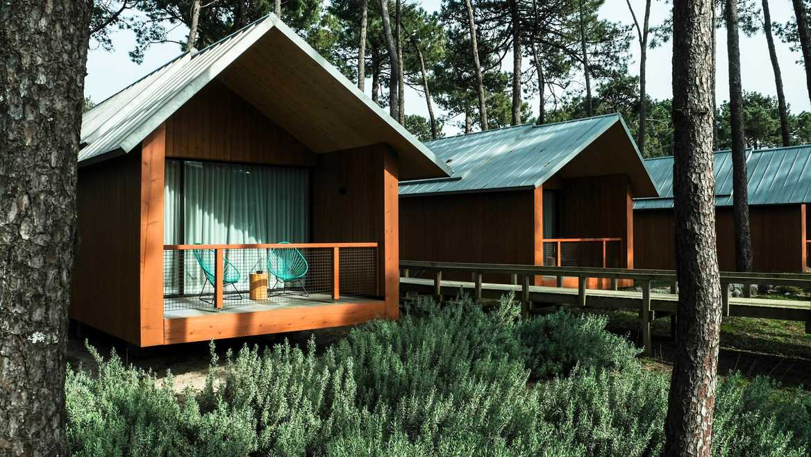 Wooden cabins in pine forest