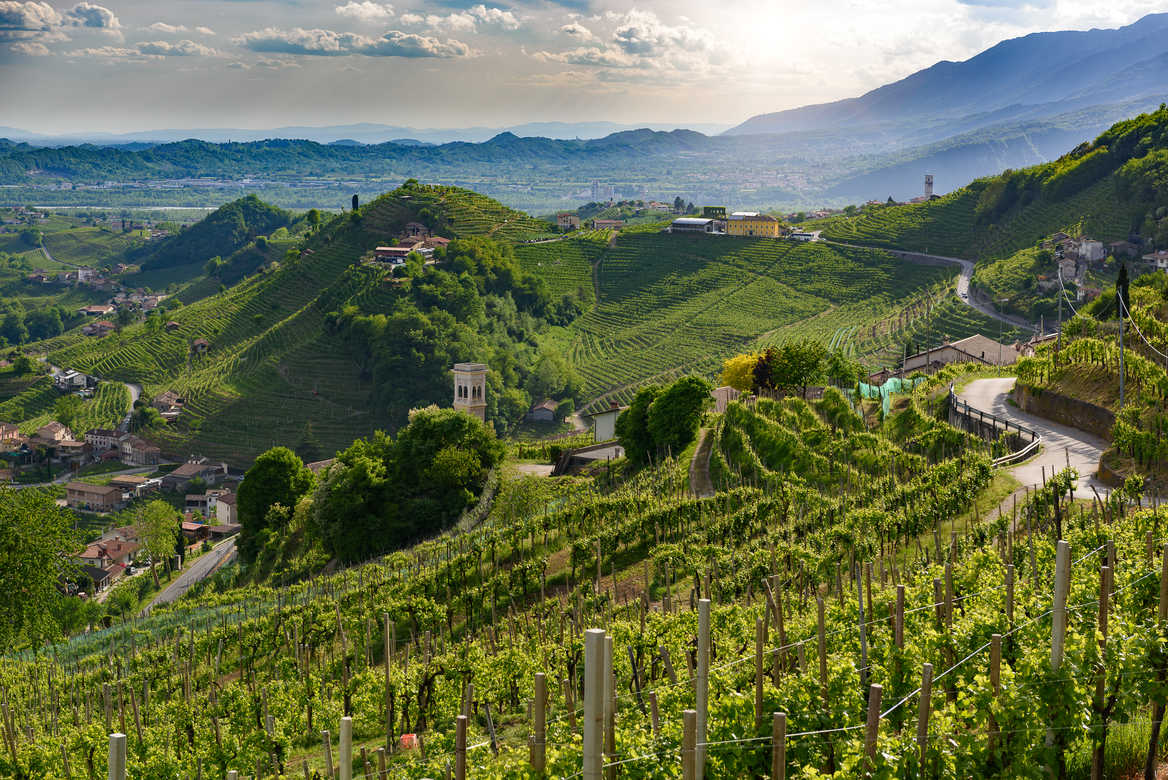 Prosecco hills and vineyards
