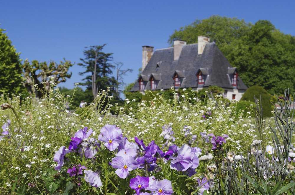 Flowers in the Loire Valley