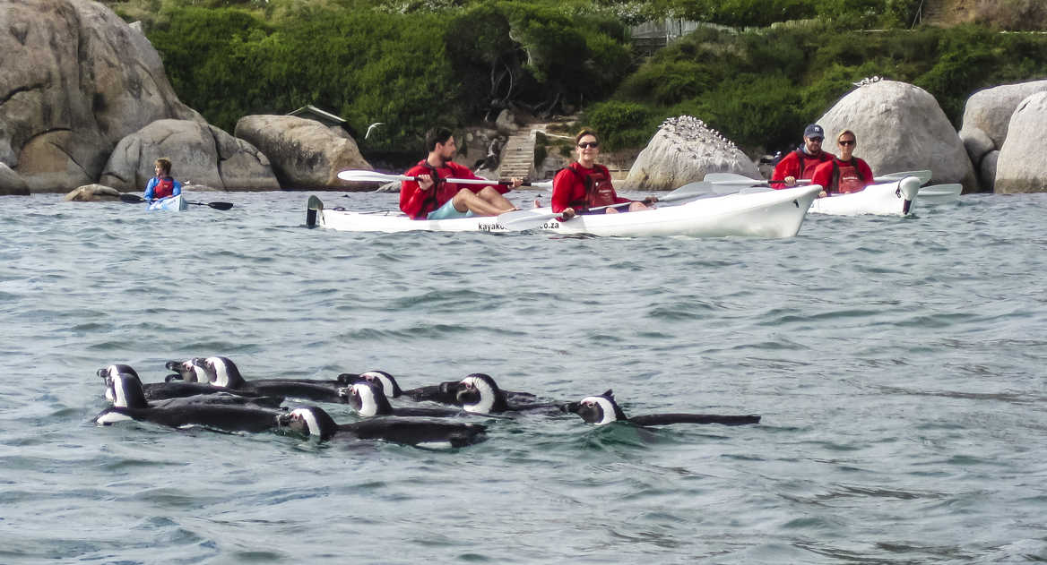 Kayaking with penguins in South Africa