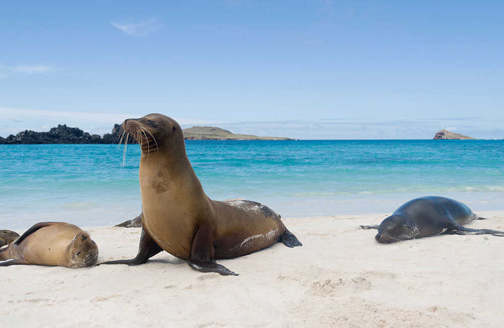 Sea lions on the Galapagos