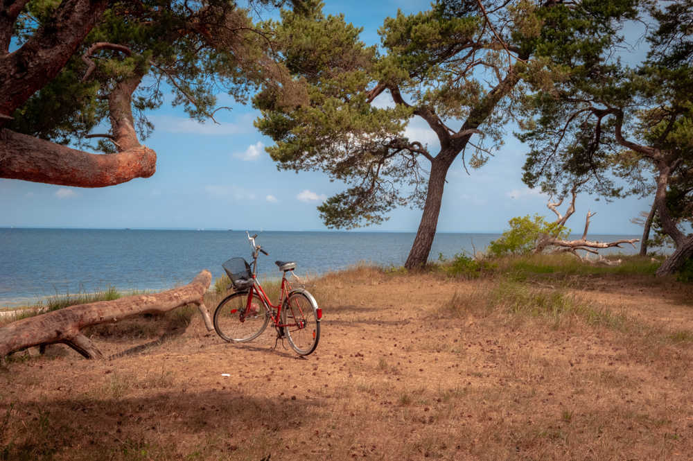 Bicycle beside the sea surrounded by trees