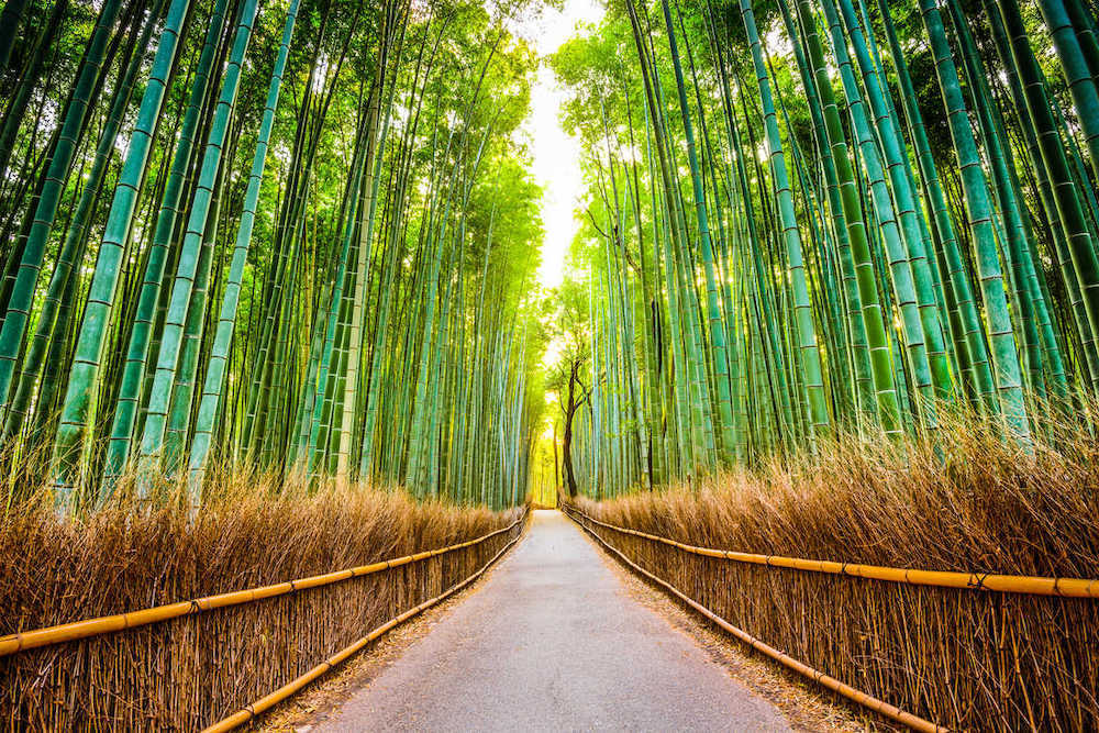 Path through the bamboo forest