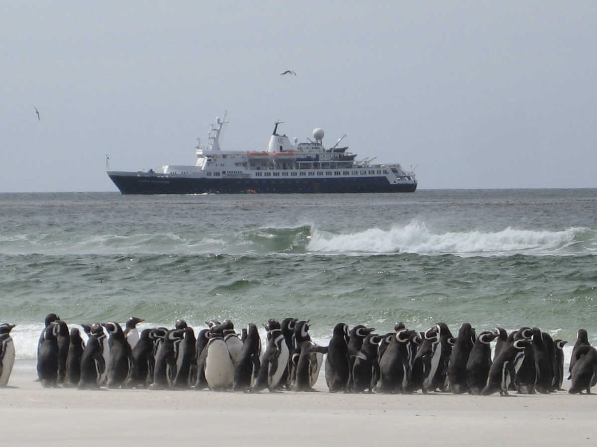 Gentoo Penguins, The Neck, Saunders Island, Falkland Islands; Ocean Adventurer offshore
