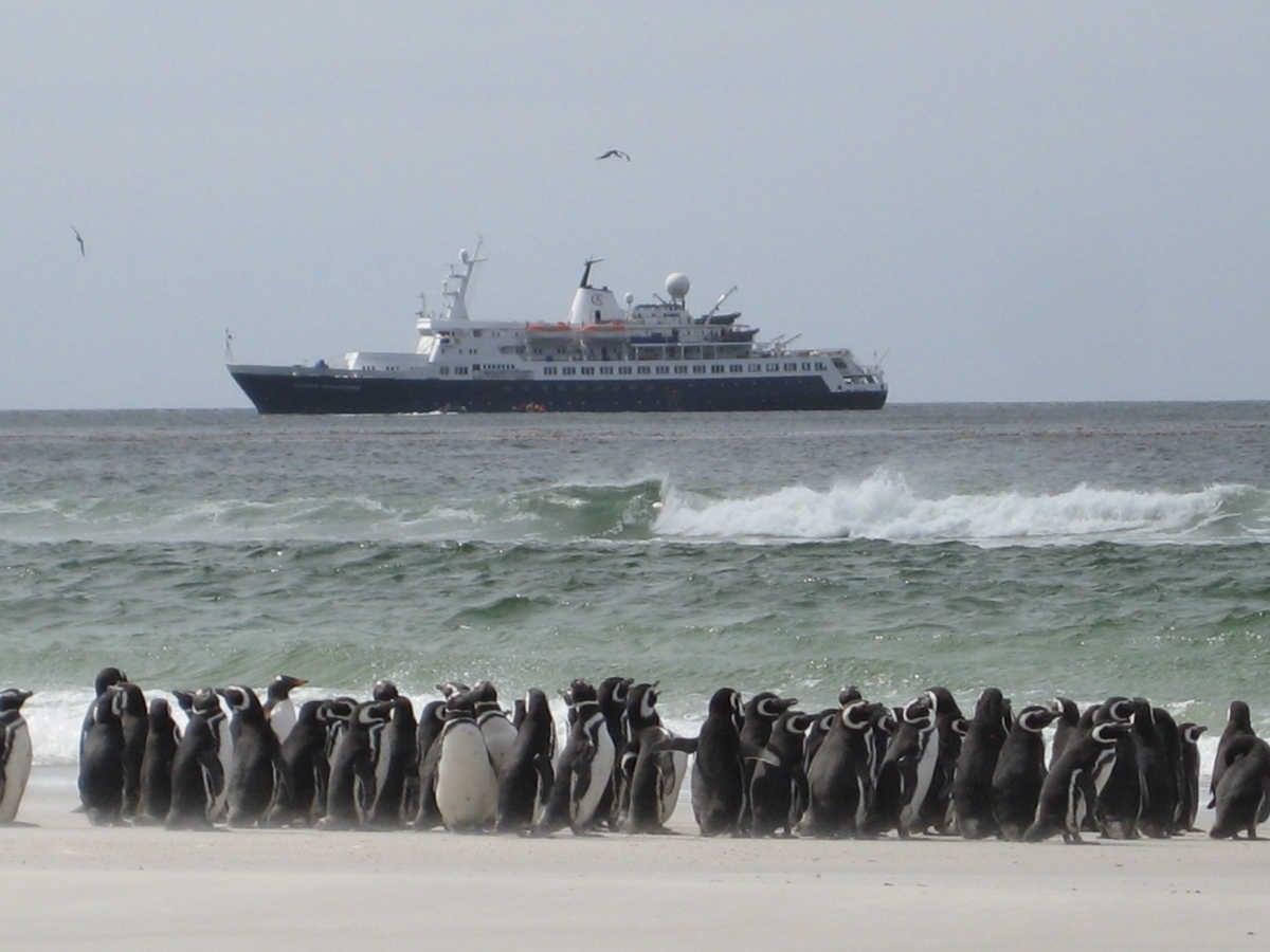 Gentoo Penguins, The Neck, Saunders Island, Falkland Islands; Ocean Adventurer offshore