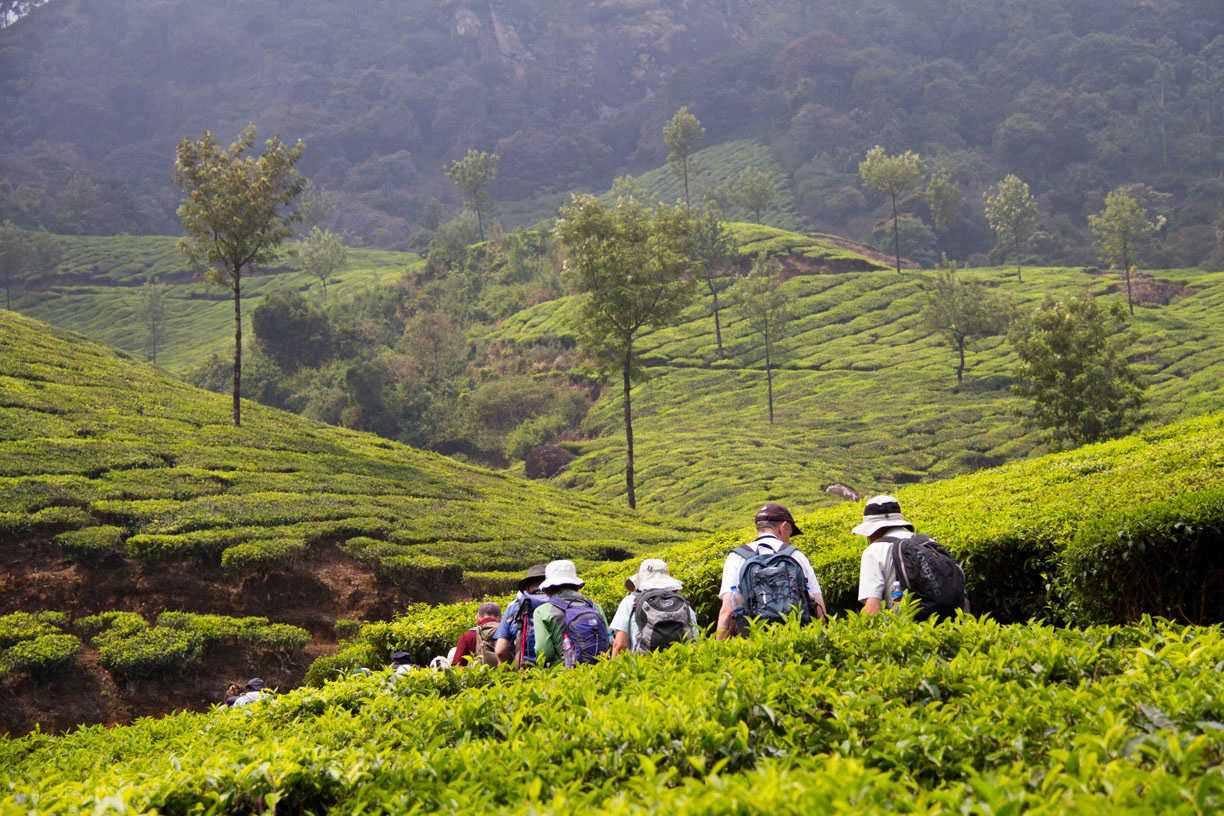 Image result for Spice Trails of Kerala - India