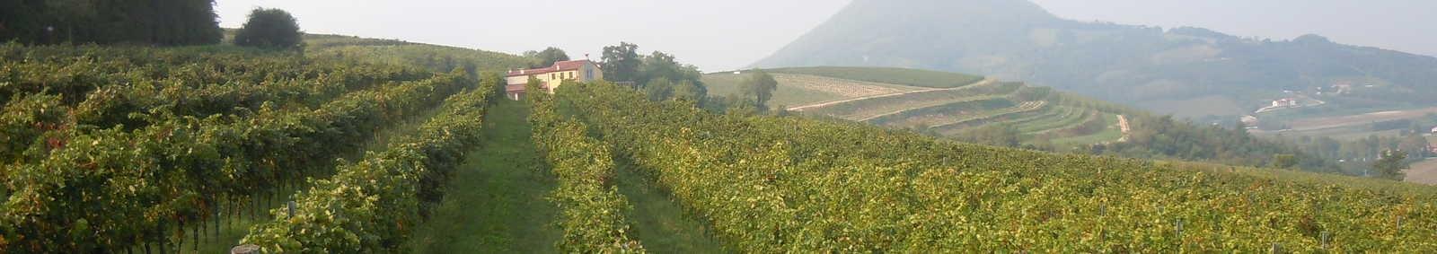 Cortela to Arqua Petrarca walk