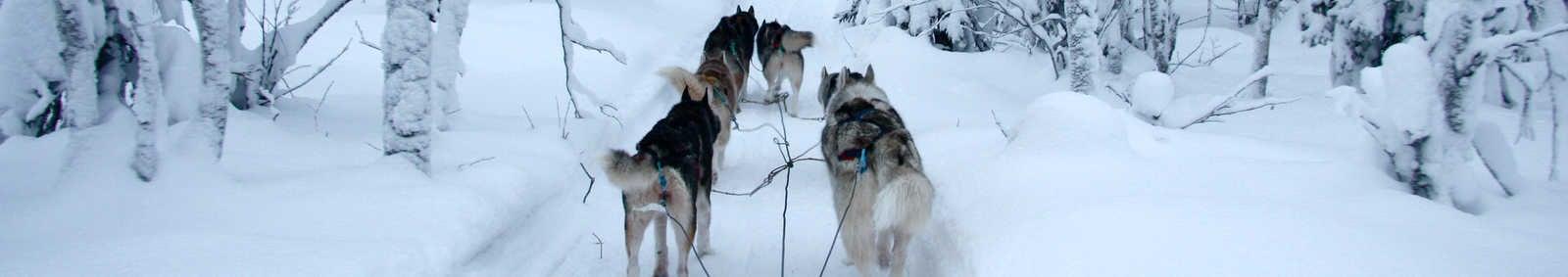 Dogsledding through Riisitunturi National Park, Finland