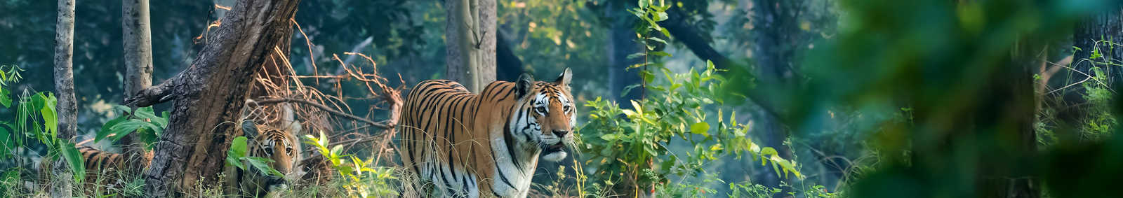 Tiger Pench National Park