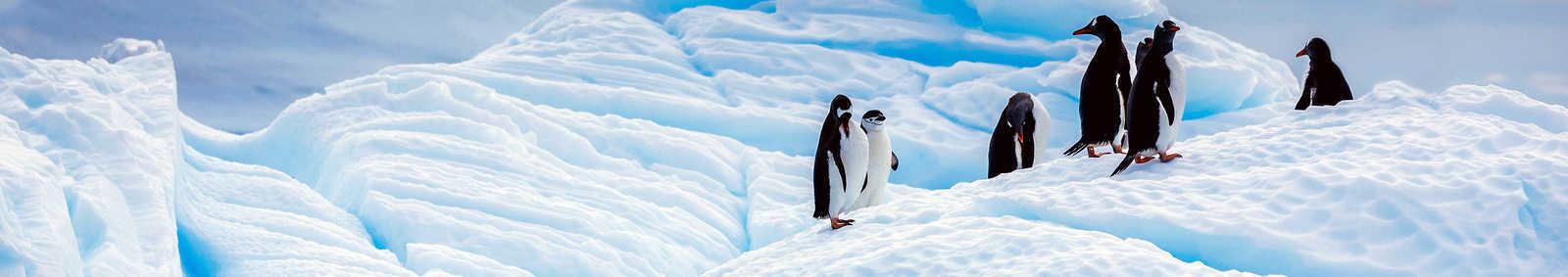 Sustainable Travel: Climate Emergency