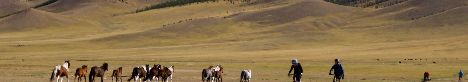 Horses and cyclists in Mongolia