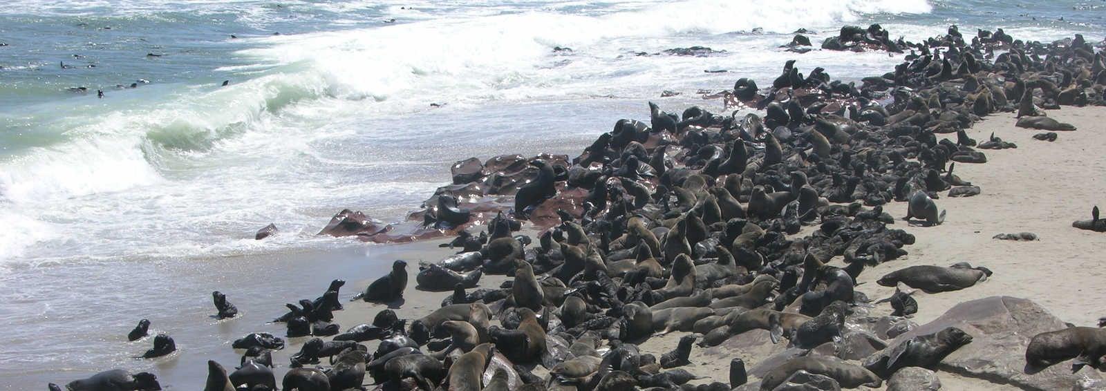 Seals at Cape Cross, Namibia