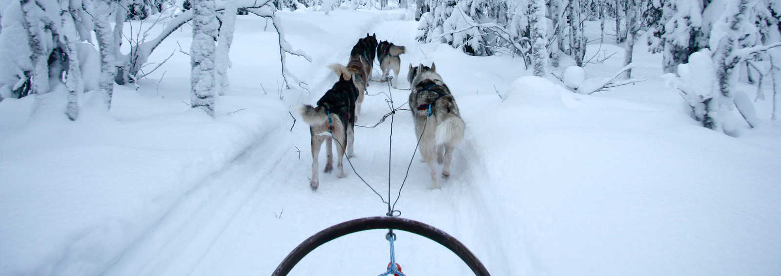 Dogsledding through Riisitunturi National Park, Finland