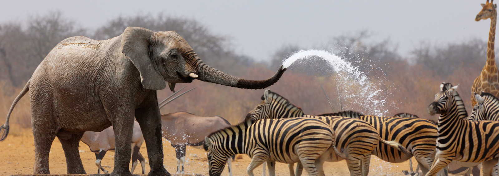 Water hole in Etosha National Park, Namibia