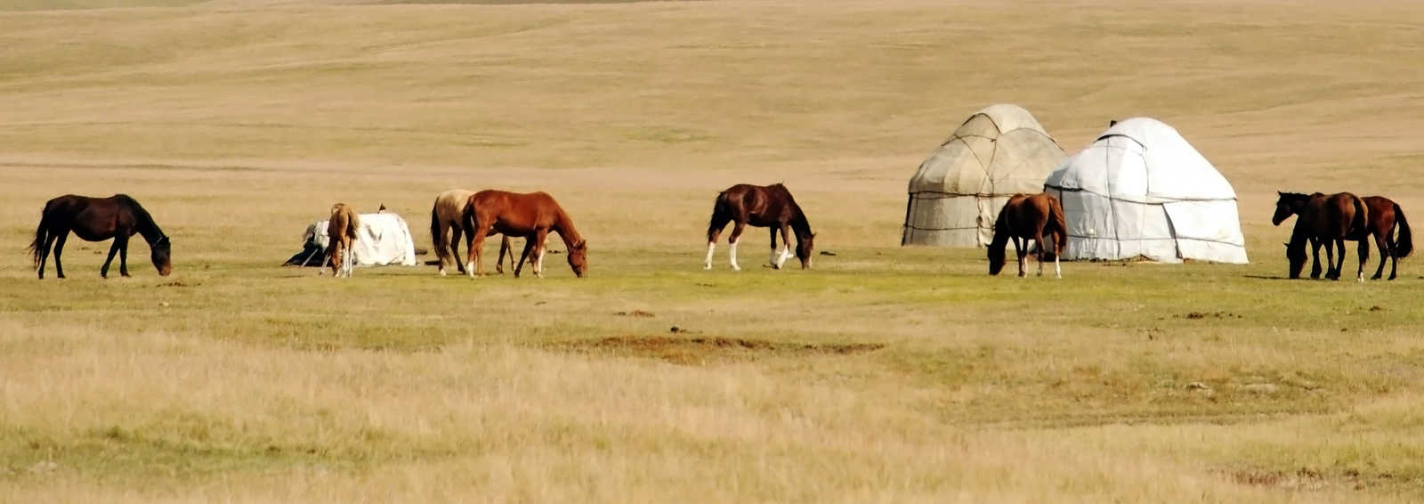 Horses and yurts in the Tien Shan Mountains, Kyrgyzstan