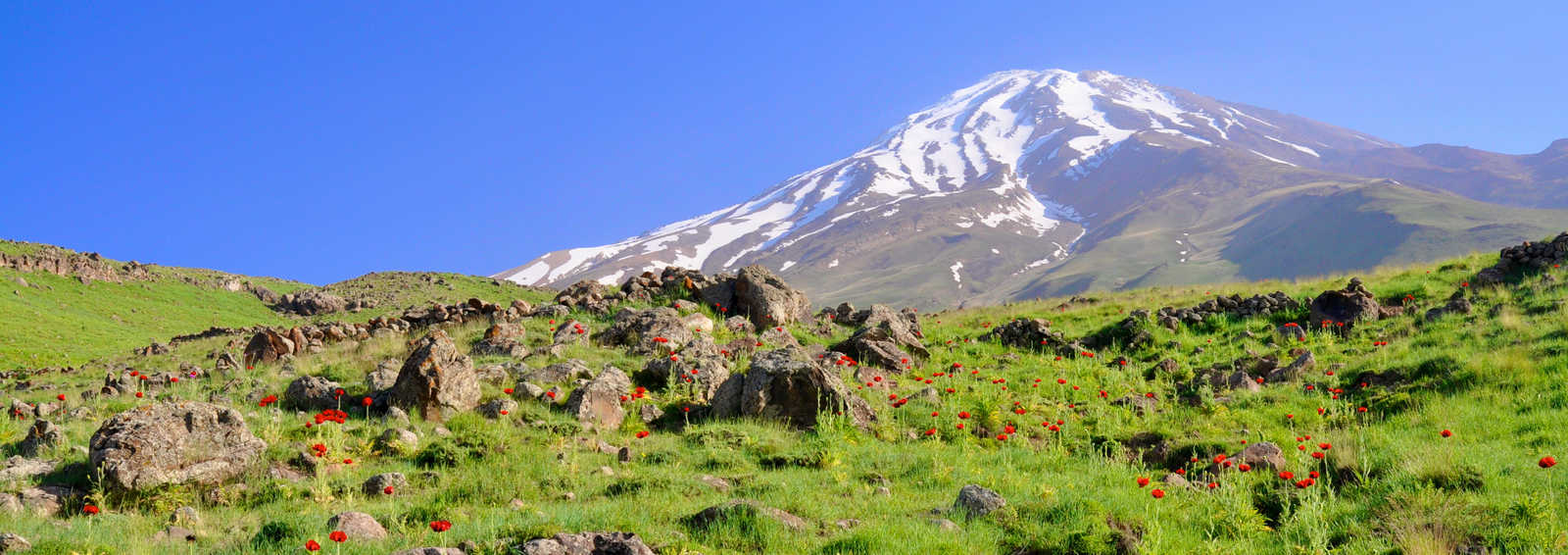 Picturesque green meadow with poppies and volcano Damavand in the background, Iran