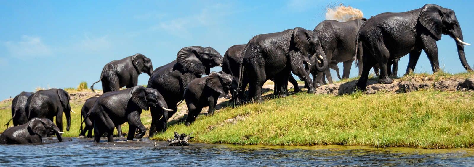 Elephants on a riverbank