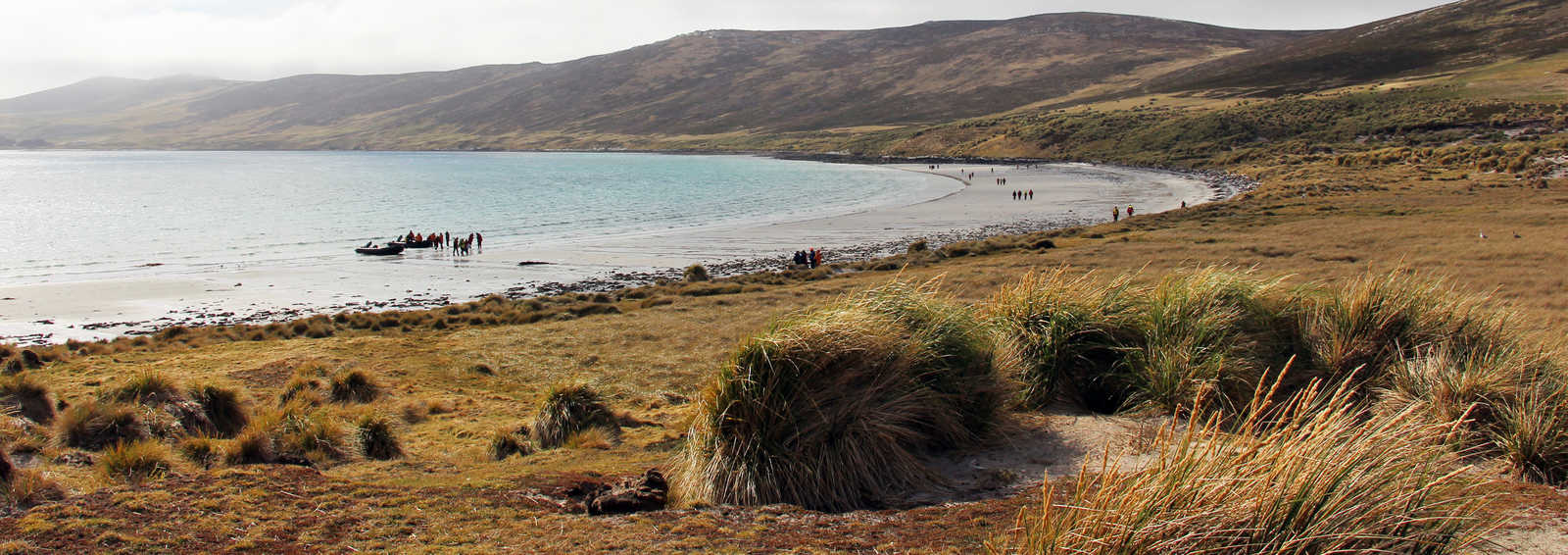 West Point Island, Falklad Islands