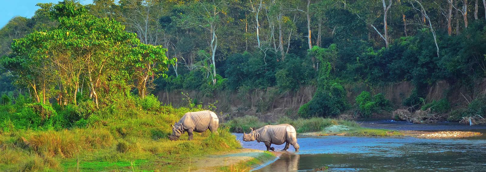 Wild landscape with asian rhinoceroses in Chitwan, Nepal