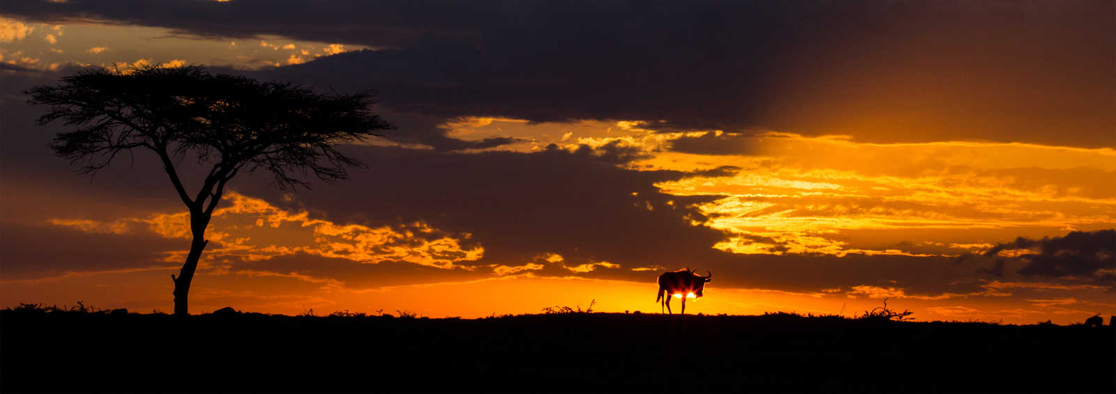 Wildbeast sunset, Masai Mara - Copyright Paul Goldstein