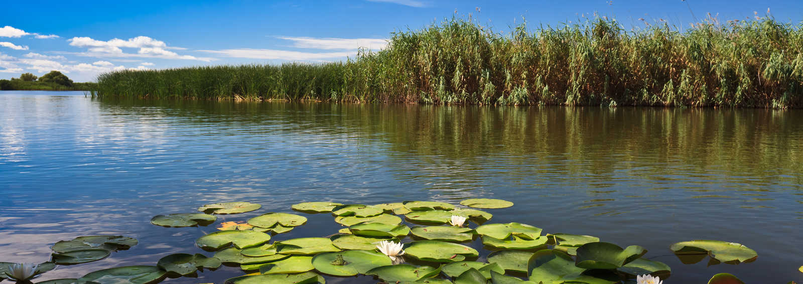 Lake on the danube Delta, Hungary