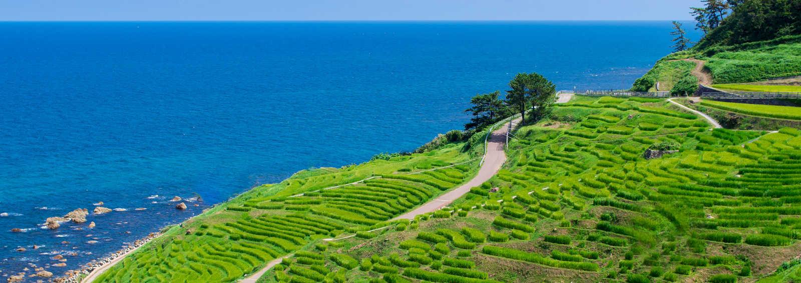 Rice paddy field along the coast, Japan