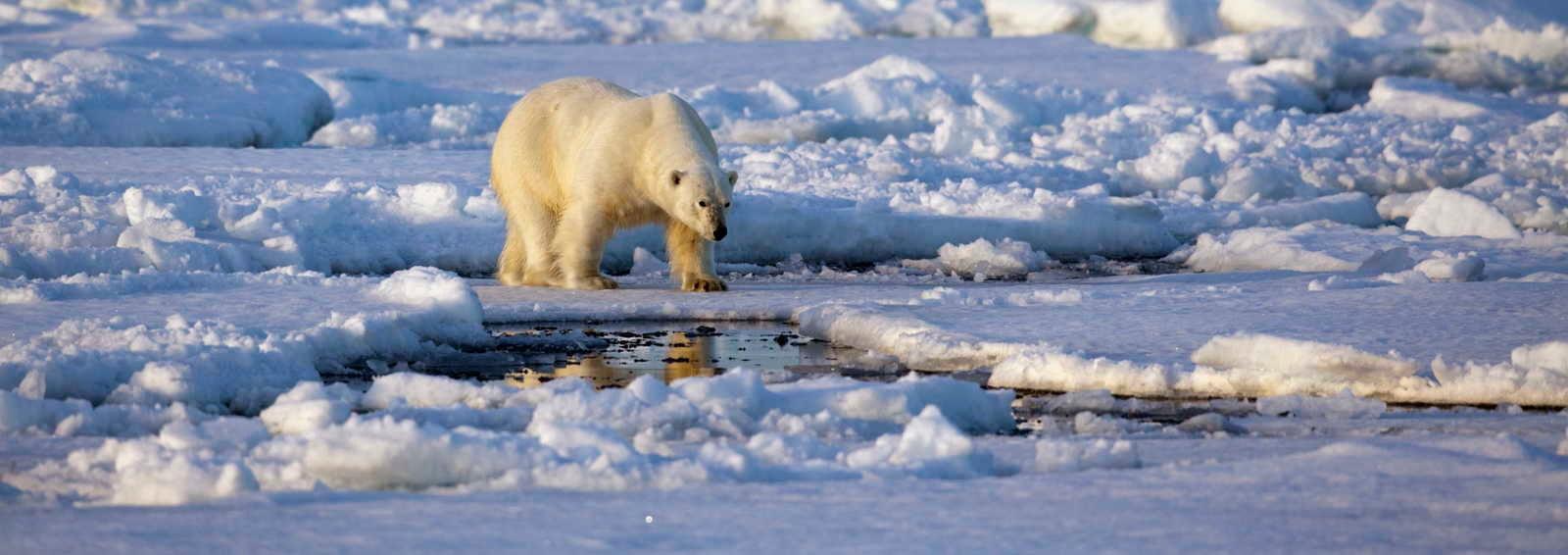 Visit Spitsbergen