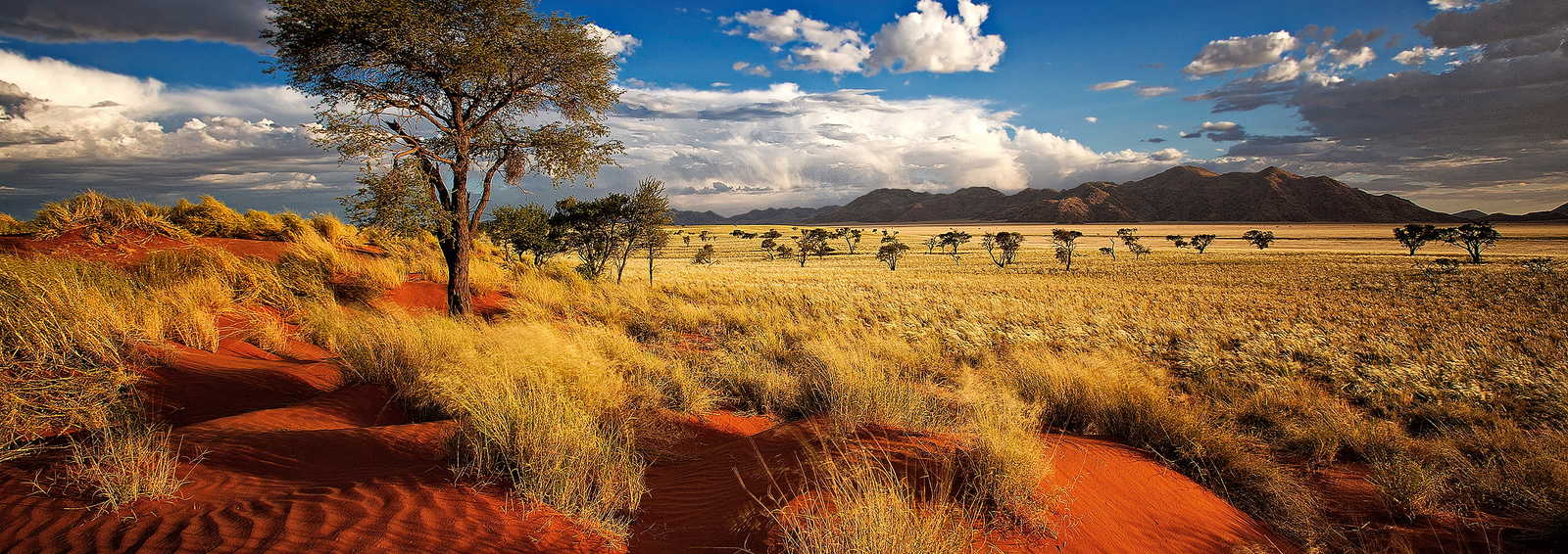 A self-drive tailor made family trip to Namibia