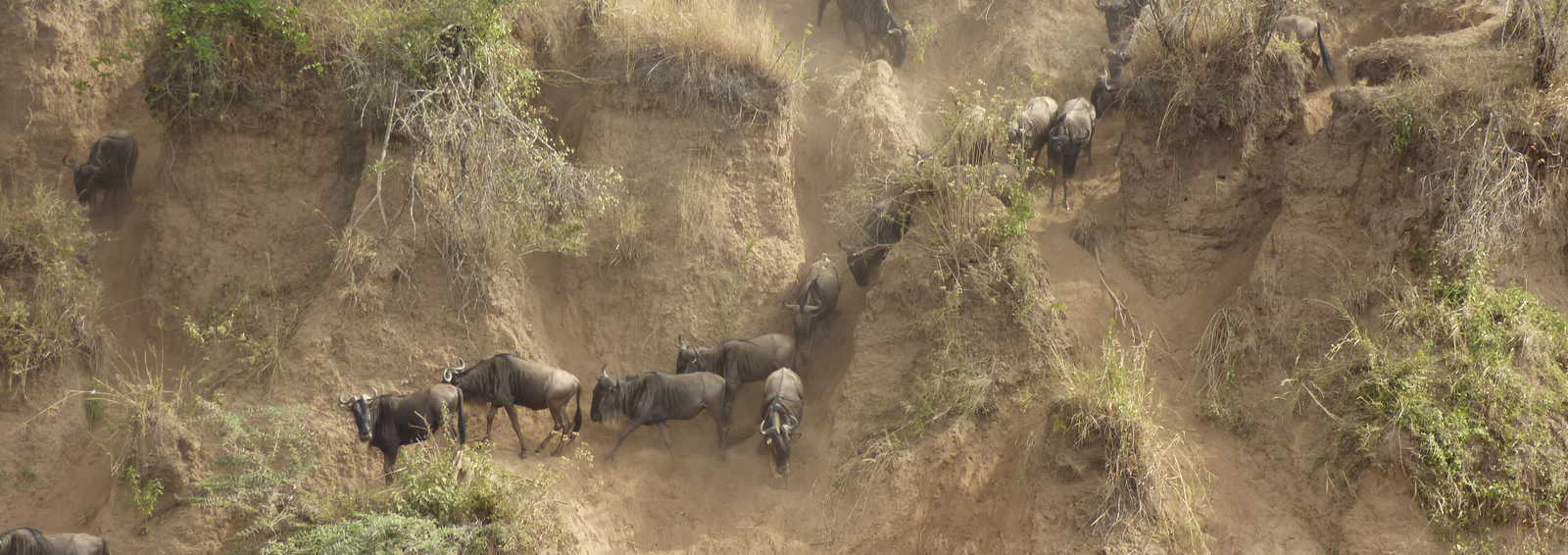 Migration in the Mara