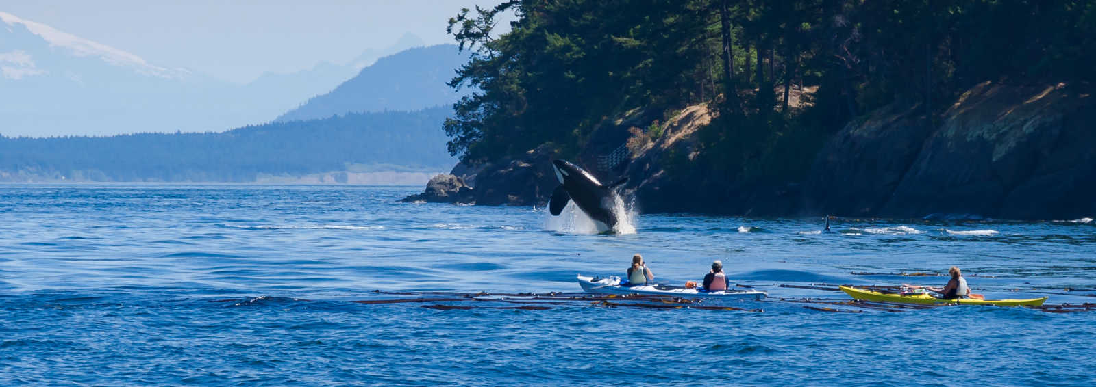 Kayaking with Orcas in Alaska