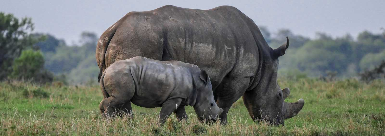 African Photo Safari