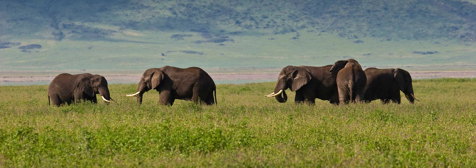 Viewing elephants on a safari holiday