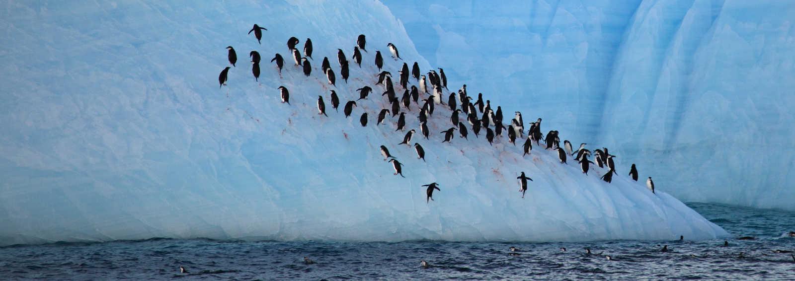 Antarctic Express: Fly the Drake | Exodus