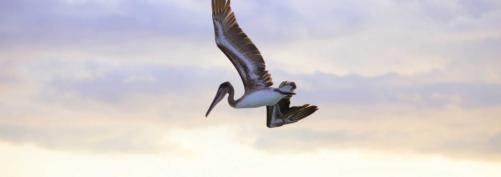 Galapagos Wildlife Cruise Exodus Pelican Pedal Boat Wiring Diagram